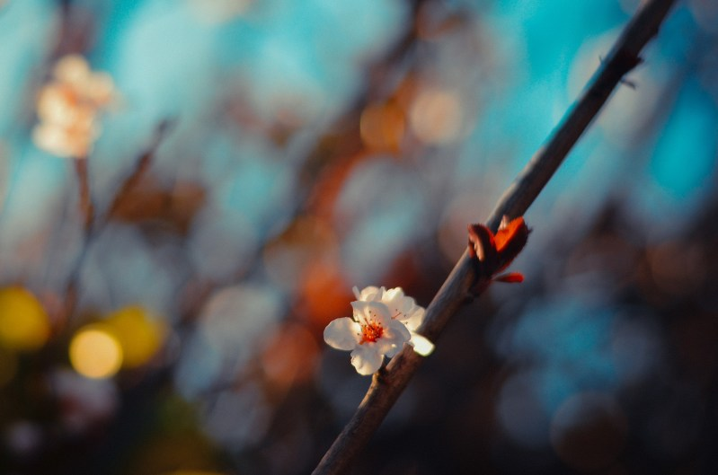 Spring Day blossoms-29